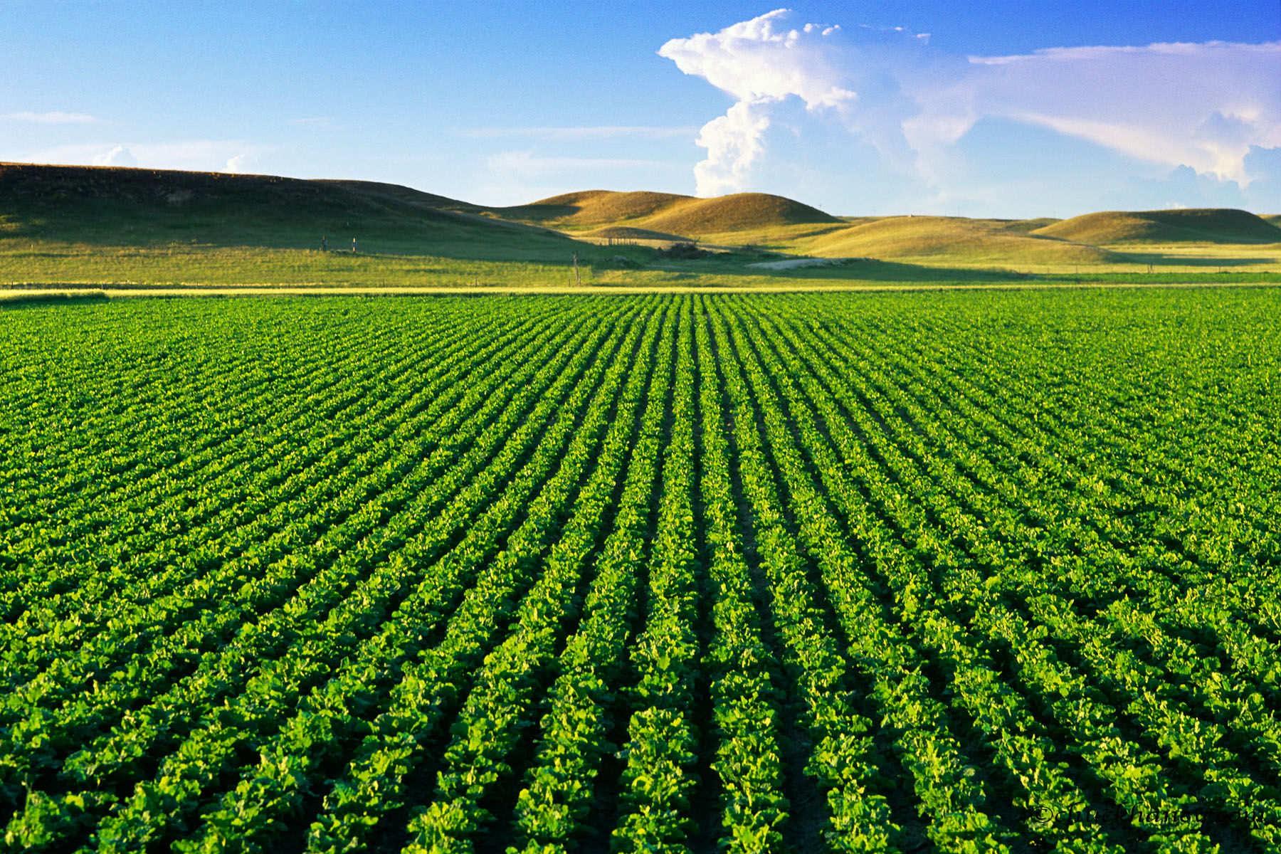 Đất nông nghiệp (Agricultural Land) là gì? Hạn mức đất nông nghiệp
